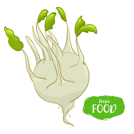 Colored illustration of kohlrabi on a white background