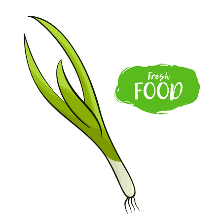 Colored illustration of a green onion on a white background Stock Illustratie