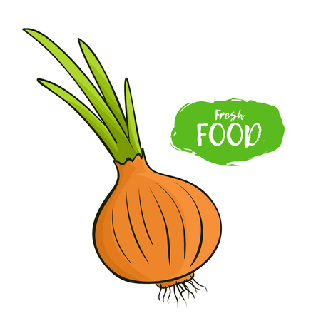 Colored illustration of an onion on a white background Stock Illustratie