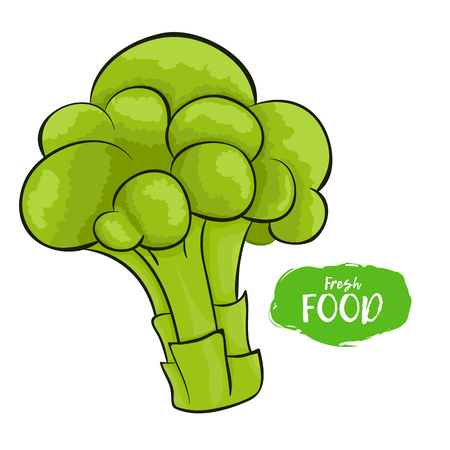 Vector illustration of broccoli. Sketch, color. Vivid picture of a vegetable. Fresh food