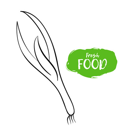 Vector illustration of a green onion. Sketch, outline. Coloring on the topic of vegetables. Fresh food Stock Illustratie