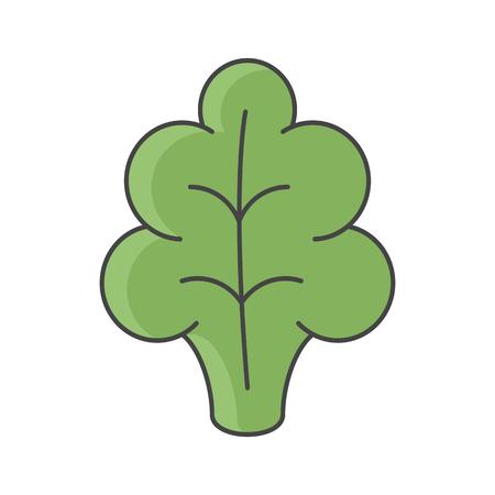 Vector color illustration of lettuce. Flat, color. Vivid picture of a vegetable. Illusztráció