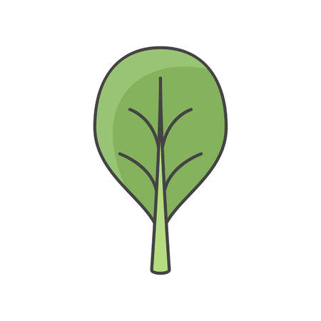 Vector illustration of spinach. Flat, color. Vivid picture of a vegetable. Stock Illustratie