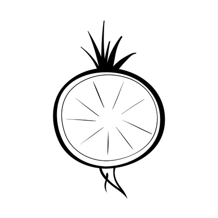 Vector hand drawn illustration of a radish. Outline doodle icon. Food sketch for print, web, mobile and infographics. Isolated on white background element. Stock Illustratie