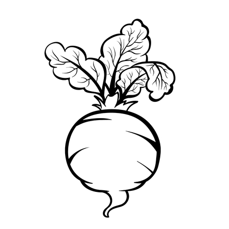 Vector hand drawn illustration of a beet. Outline doodle icon. Food sketch for print, web, mobile and infographics. Isolated on white background element.