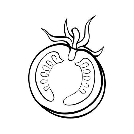Vector hand drawn illustration of a tomato. Outline doodle icon. Food sketch for print, web, mobile and infographics. Isolated on white background element. Stockfoto - 114692780