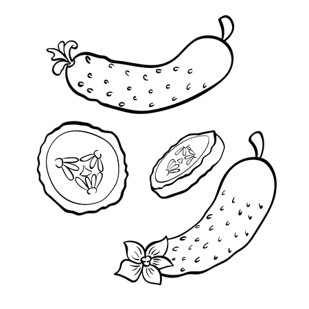 Vector hand drawn illustration of cucumber. Outline doodle icon. Food sketch for print, web, mobile and infographics. Isolated on white background element. Set Stock Illustratie