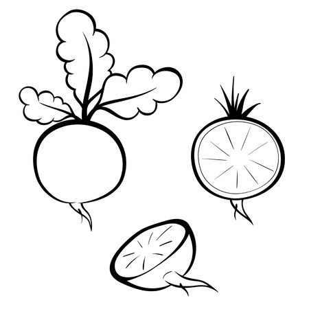 Vector hand drawn illustration of radish. Outline doodle icon. Food sketch for print, web, mobile and infographics. Isolated on white background element. Set Stock Illustratie