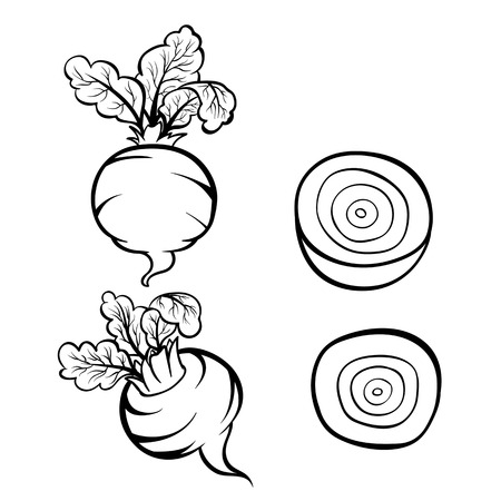 Vector hand drawn illustration of beet. Outline doodle icon. Food sketch for print, web, mobile and infographics. Isolated on white background element. Set Stock Illustratie