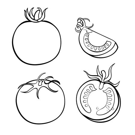 Vector hand drawn illustration of tomato. Outline doodle icon. Food sketch for print, web, mobile and infographics. Isolated on white background element. Set Stock Illustratie