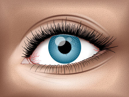 Human Eye. High resolution vector