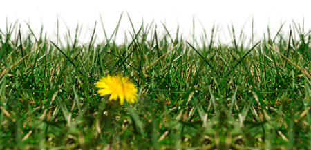 Seamless image with grass on a white background.