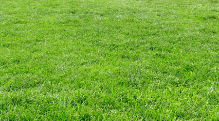 Lawn background with green grass Imagens