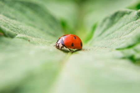 Macro filming of a red bug on a leaf of a plant Stock fotó