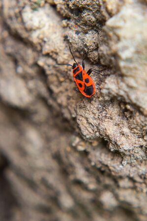 Macro shot of a red bug on the ground 写真素材