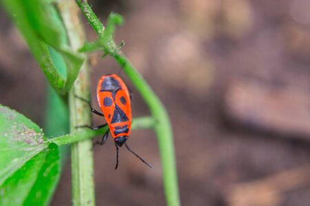 Macro shot of a red bug on a plant