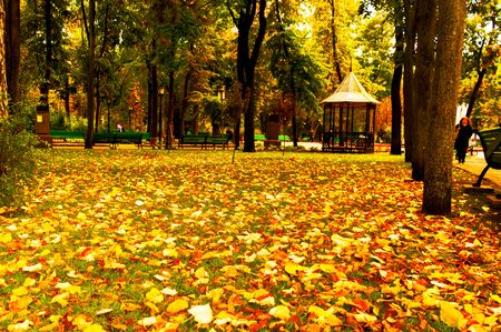 Autumn landscape with falling leaves in an old park