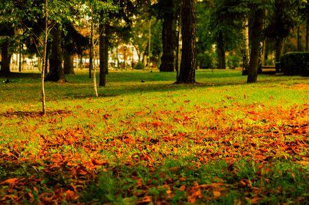 Foglie rosse sull'erba nel tardo autunno in un parco cittadino