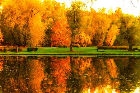 Yellow and red leaves on trees in a park near a lake in autumn
