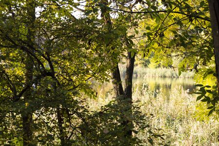 Autumn landscape by the lake in the park