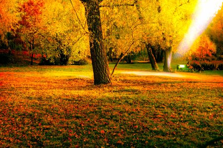 Autumn park in late fall with the rays of the sun