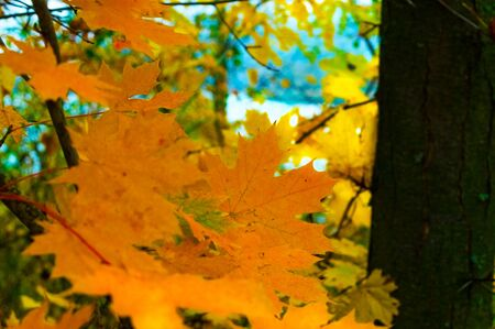 Yellowed leaves of trees in a forest by the lake 写真素材