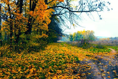 Dirt roads along the forest in late autumn
