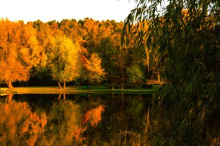 Autumn landscape on the lake in a park with yellowed trees