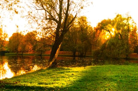 A wonderful sunset with rays through the trees in a park by the lake 写真素材