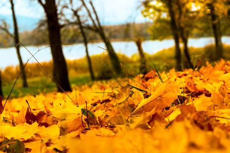 Orange colors of the autumn forest on the lake 写真素材