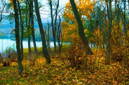 Autumn view from the forest to the lake in late autumn