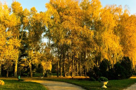 Red autumn with birches in the city botanical garden 写真素材