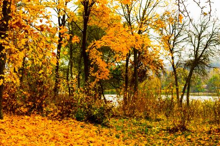 Autumn landscape of yellowed leaves on the trees near the lake