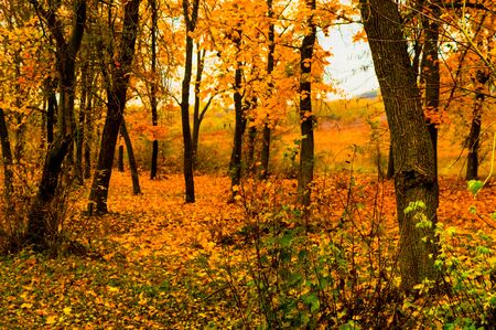 Beautiful autumn landscape at the edge of the forest