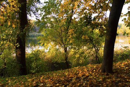 Beautiful autumn landscape in a city park