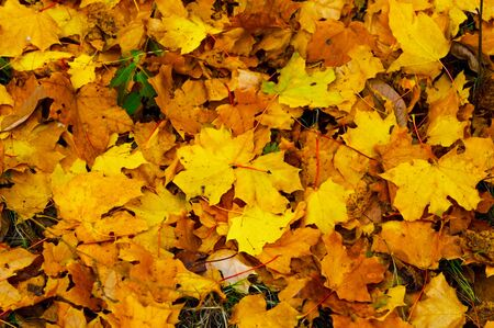 Fallen leaves of trees on the ground in late autumn