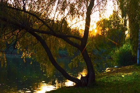 Multicolor autumn landscape by the lake in the park 写真素材