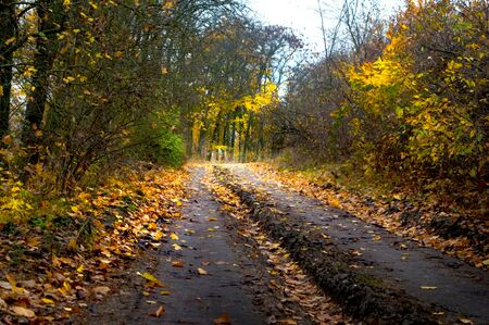 Abandoned road in a colorful autumn forest Stock fotó
