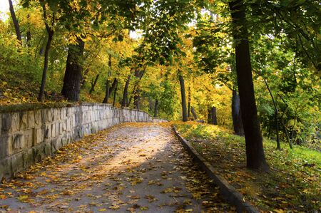Alley in the park with fallen leaves in autumn