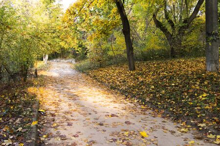 Road in the park with the falling rays of the sun in the fall