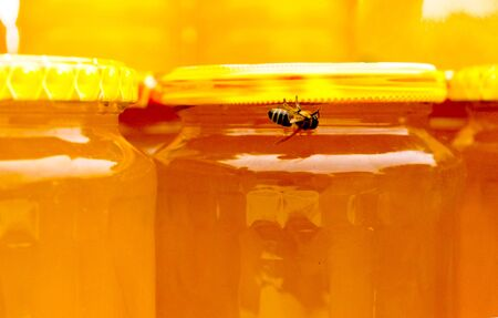 Bee on a jar with honey on a yellow background Stock fotó