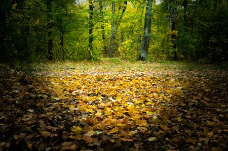 The fallen leaves of trees in the meadow in the autumn forest Stock fotó