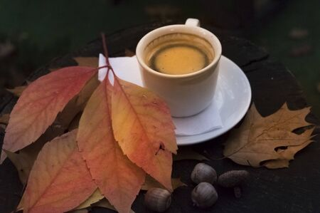 A cup of coffee with orange leaves and acorns in the forest on a stump