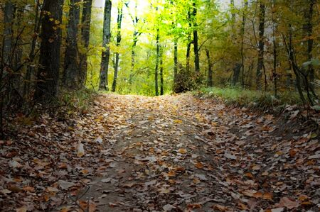 A road covered with leaves in the autumn forest