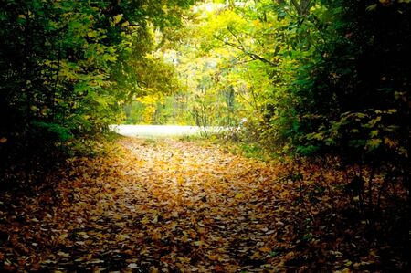 Autumn landscape of a road in a forest with fallen foliage