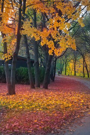 Colorful autumn landscape in a city park