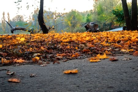 Yellow and orange leaves of trees on the ground in a park at close range