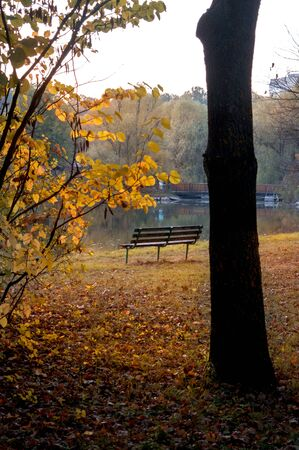Cloudy day in the autumn park with orange foliage on trees by the lake Imagens