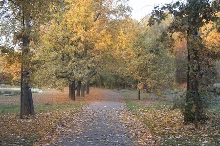 Autumn time in a city park with falling foliage Imagens
