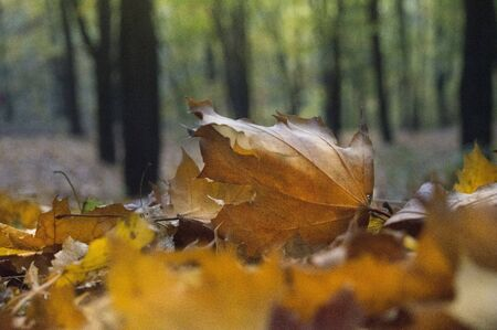 Autumn foliage on the ground in the forest in late fall
